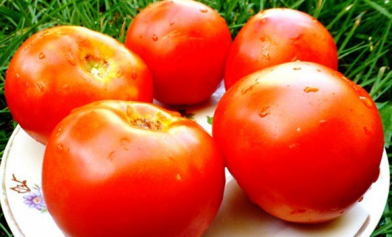 Плоды томатов Белый налив