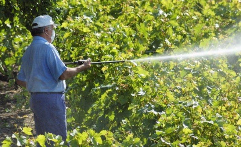 опрыскивает виноград