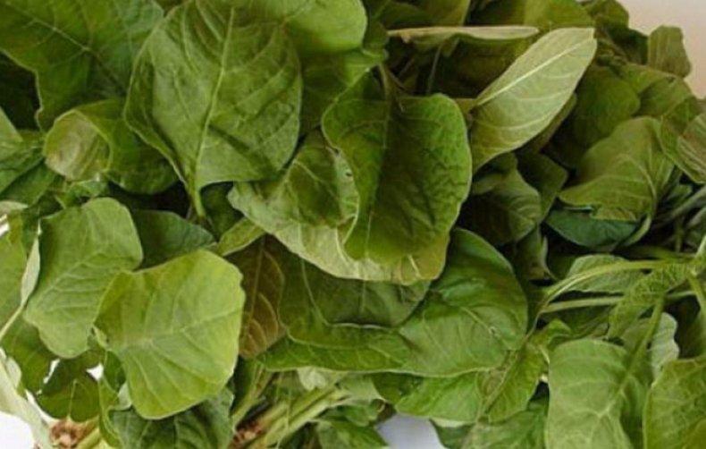 Амарант (щирица) запрокинутый полезные свойства и заготовка лекарственного сырья