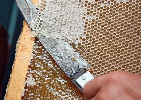 Продукты пчеловодства забрус как применять