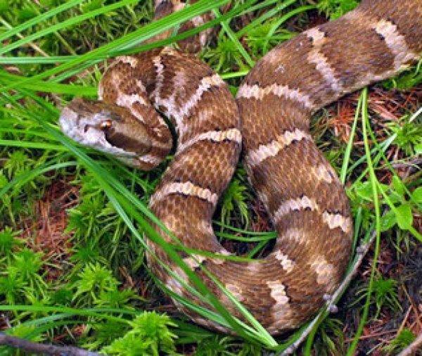 Как избавиться от змей в саду