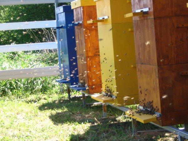 Особенности и технологии многокорпусного содержания пчел