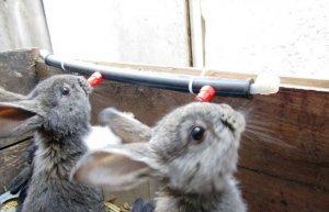 Поилка для кроликов своими руками