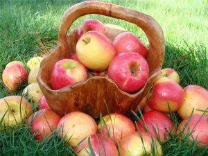 Самые вкусные сорта яблок
