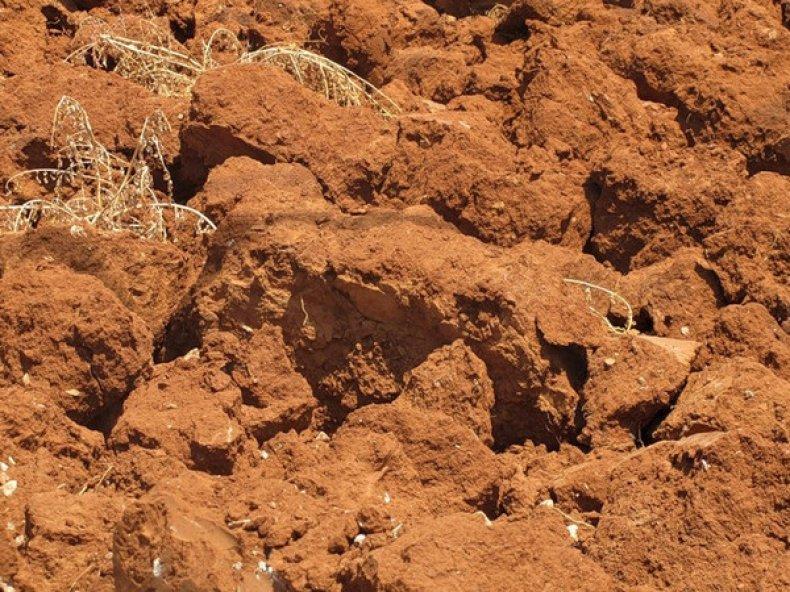 Глинистые почвы