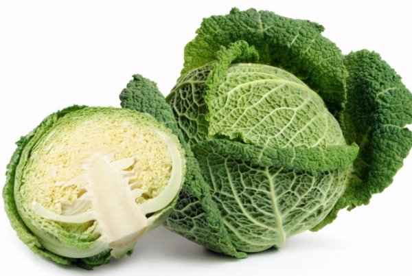 савойская капуста польза и вред для здоровья
