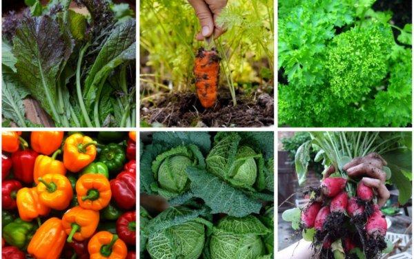 Какие овощи можно посадить в огороде