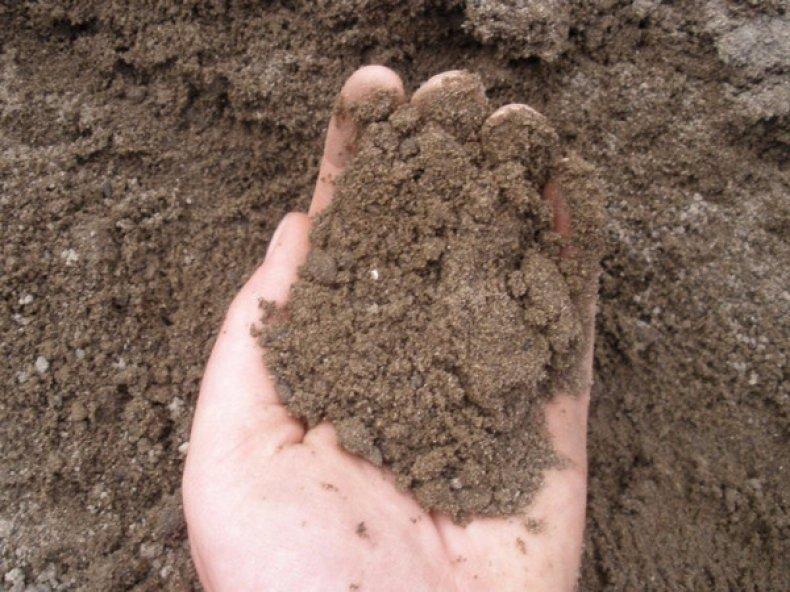 Супесчаные почвы
