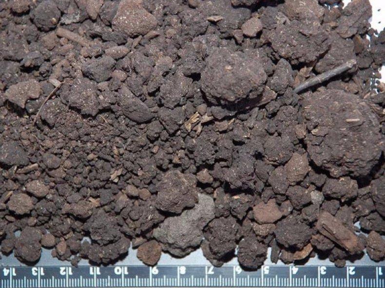 Торфяные почвы