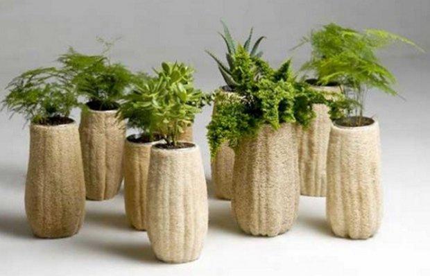 Люффа вирощування з насіння