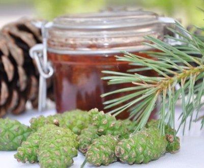 пыльца сосны как принимать с медом