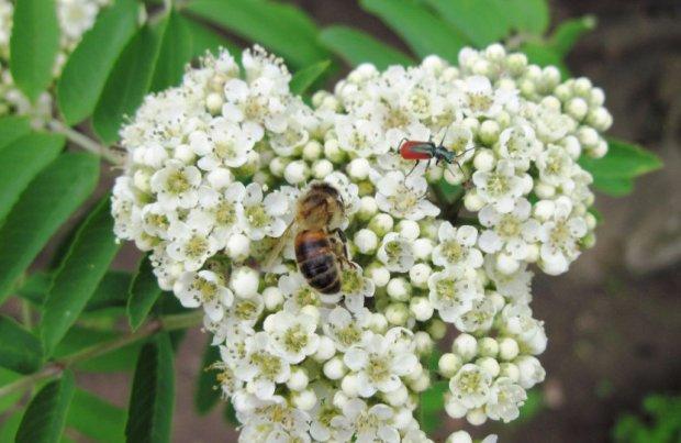 Медоносные травы для пчел