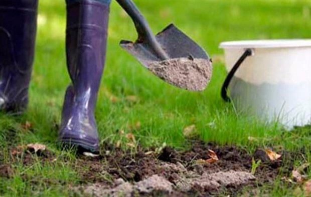 Борьба с землеройками на дачном участке