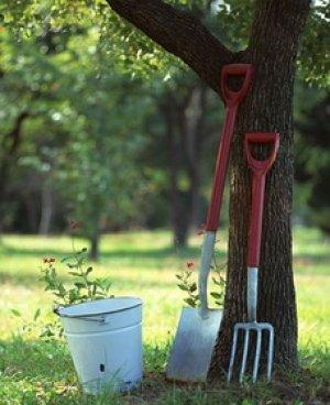 Как посадить абрикос осенью