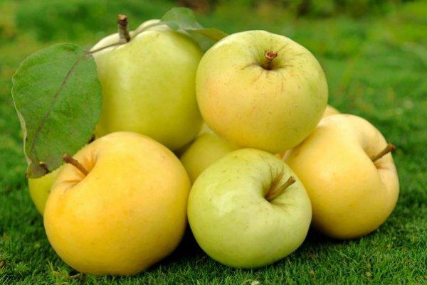 Вкуснейший сорт яблони Уральское Наливное