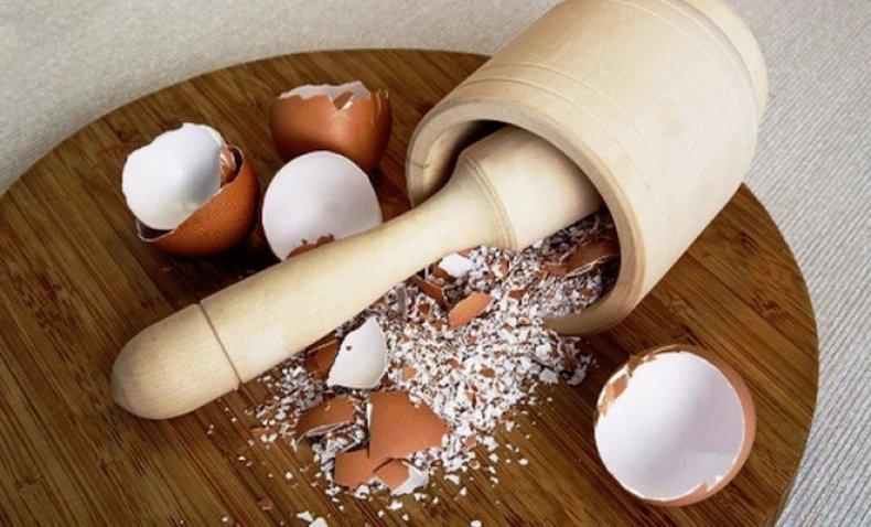 Используем яичную скорлупу как удобрение для сада и огорода