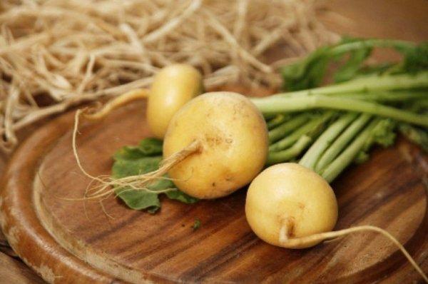 Традиционный русский овощ репа — секреты выращивания и ухода в открытом грунте, в теплице и дома