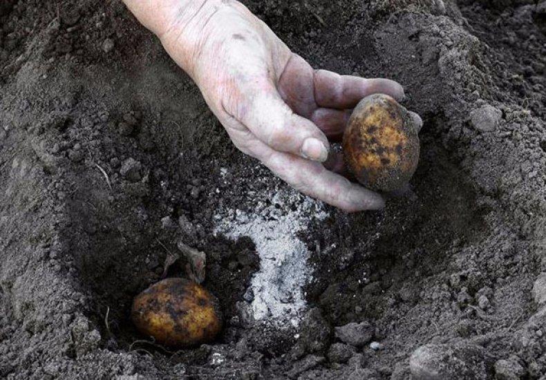 Посадка картофеля грядкой