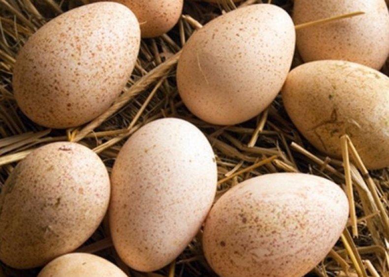 таблица, инкубация, индюшиных, яйцо