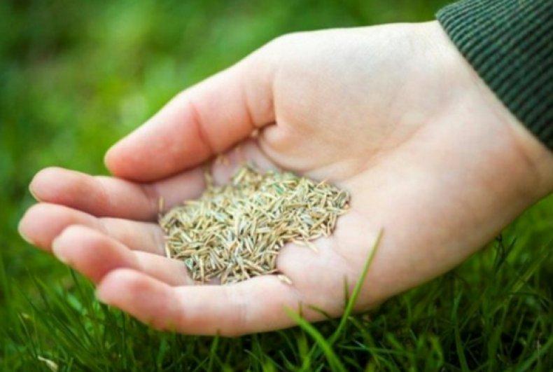 Смесь газоных трав