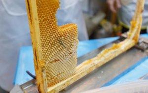как извлечь мед из сот