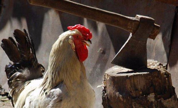Чем забить курицу в домашних условиях
