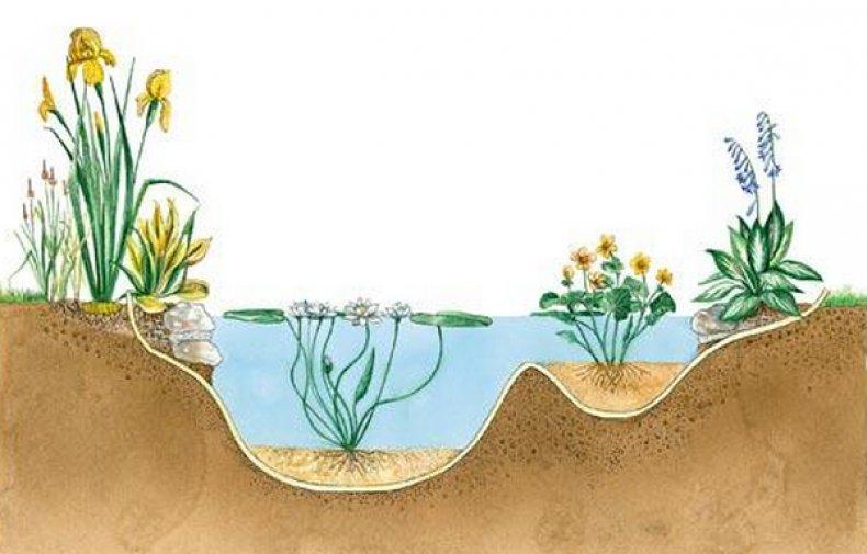 волшебный мох растения для водоемов