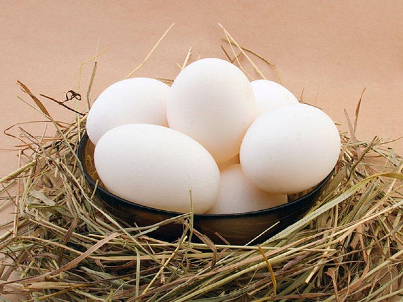 Яйца молодых кур