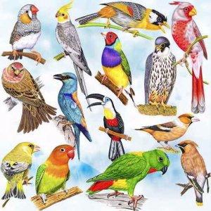 Домашние птички
