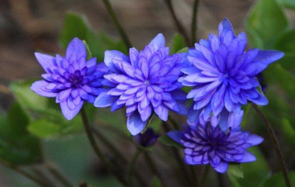 Фото садовых цвета