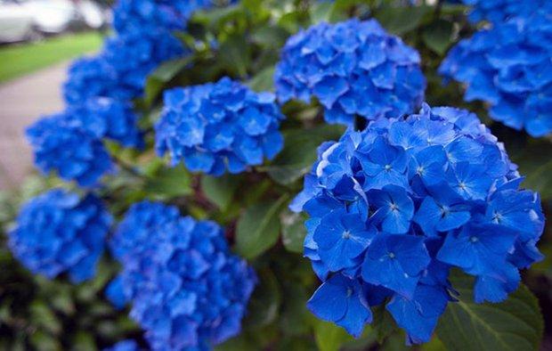 Какие низкорослые цветы выбрать для клумбы - фото