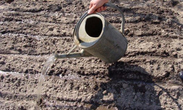 Аммиачная вода как удобрение: состав, нормы и способы внесения