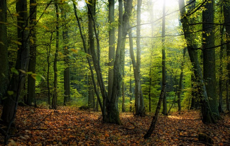 дерево, продолжительность, береза, клен, липа, яблоня