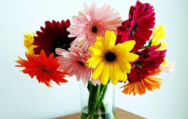 Цветы большие ромашки название