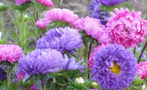 Гацания фото цветов в клумбе