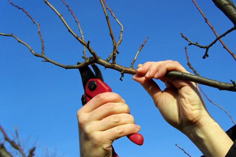 обрезка, дерево, весна, плодовый