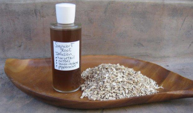 Мыльнянка (сапонария) лекарственная: полезные свойства, применение, противопоказания