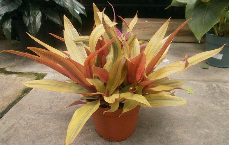 цветок, уход, домашний, декоративно-лиственных растений, питательных веществ