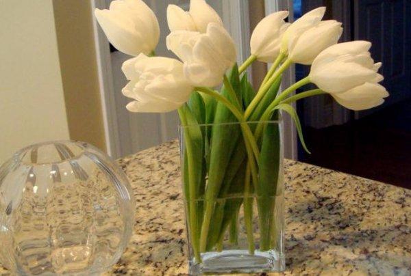 как продлить жизнь тюльпанов в вазе результаты: посмотреть этой