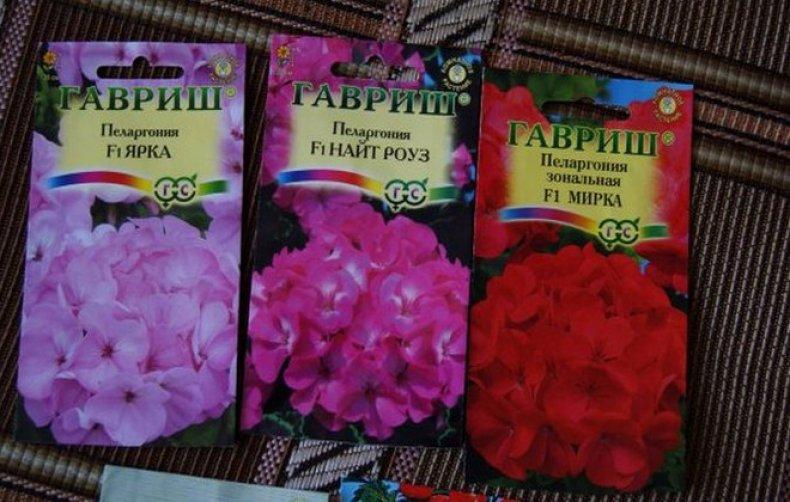 посадка пеларгонии семенами в домашних