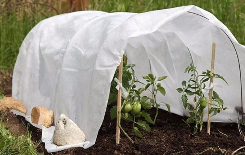 укрывной, материал, агротекс, весенней поры, даёт защиту