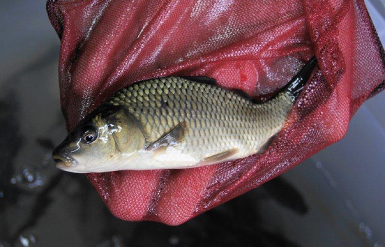 как разводить рыбу в домашних условиях в бассейне