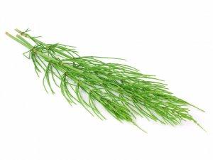 хвощ, полевой, сорняк, огород