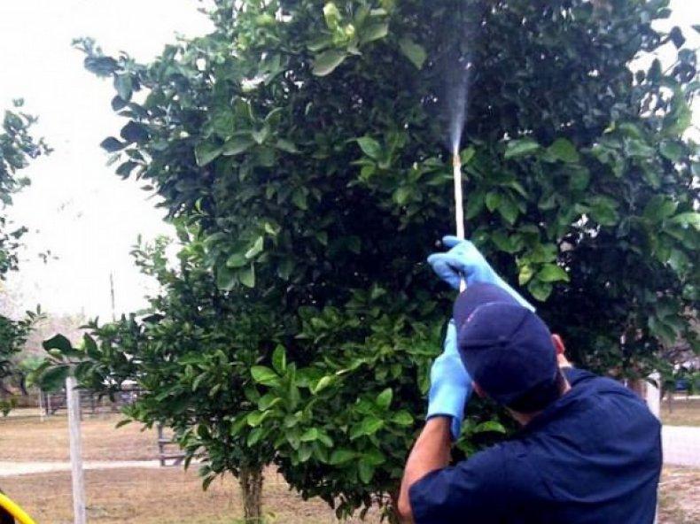 Обработка растений марганцовкой