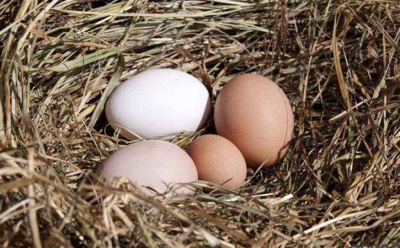 Мелкое яйцо