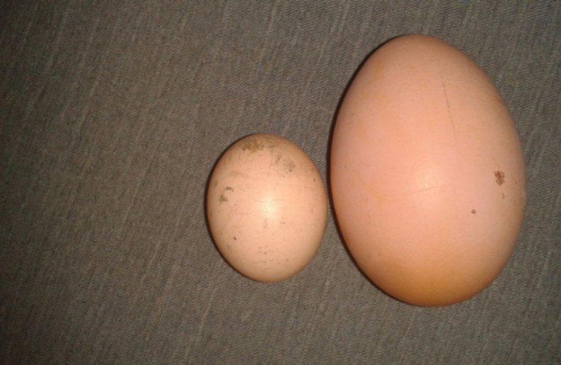 Маленькое яйцо