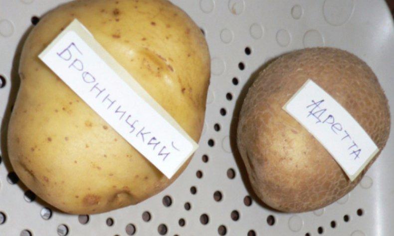 Альтернариоз картофеля описание, фото, меры борьбы, профилактика