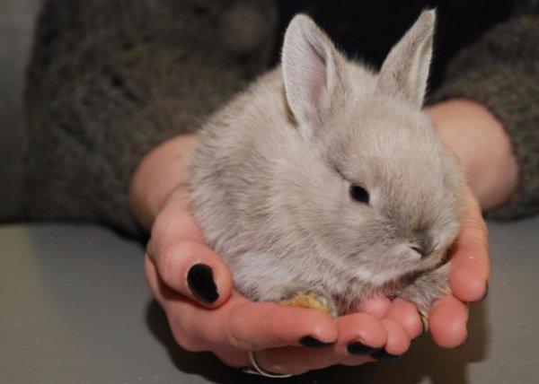 Всё, что нужно знать о продолжительности жизни кроликов