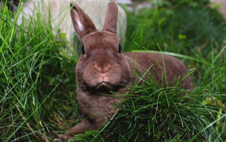 кролик, домашний, длительность жизни, живут зайцы, влияние длительность