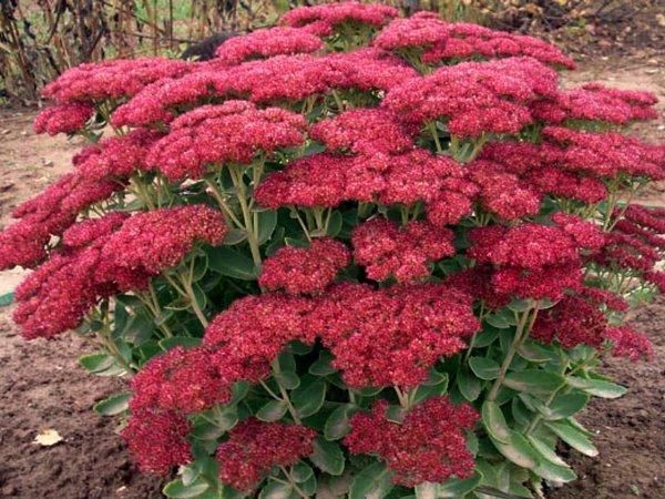 Цвет лада ларгус 691